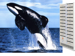 5 Reasons why Orca™ is the Perfect Name for Corvus Energy Storage Systems